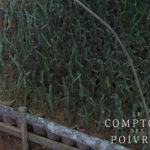 Pépinière de poivrier bio du Kérala