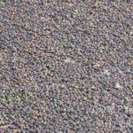 Séchage du poivre dans le Kérala