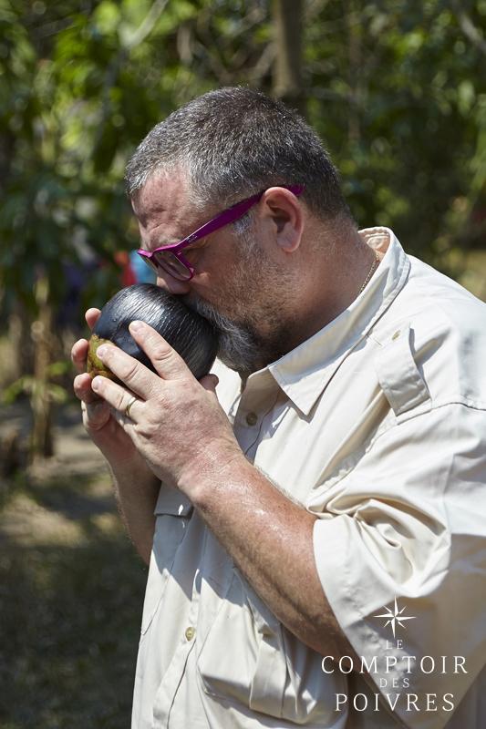 Dégustation du fruit du palmier à sucre