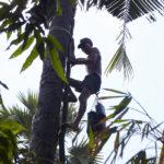 Sucre de palmier