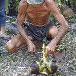 Fruit du palmier à sucre