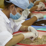 Tri du poivre de Kampot